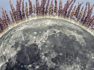 Лаванда: 8 лечебных свойств этого растения